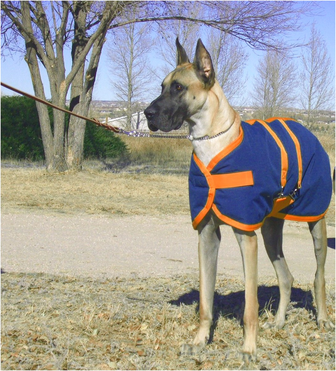 great dane winter coats