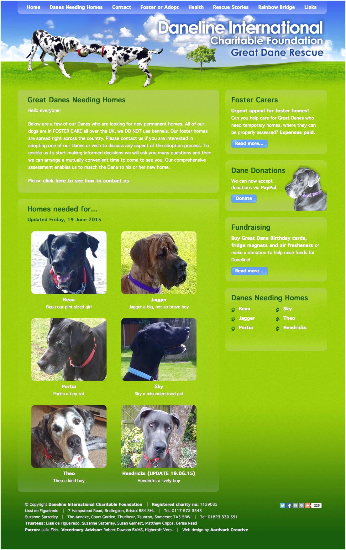 great danes for adoption new england
