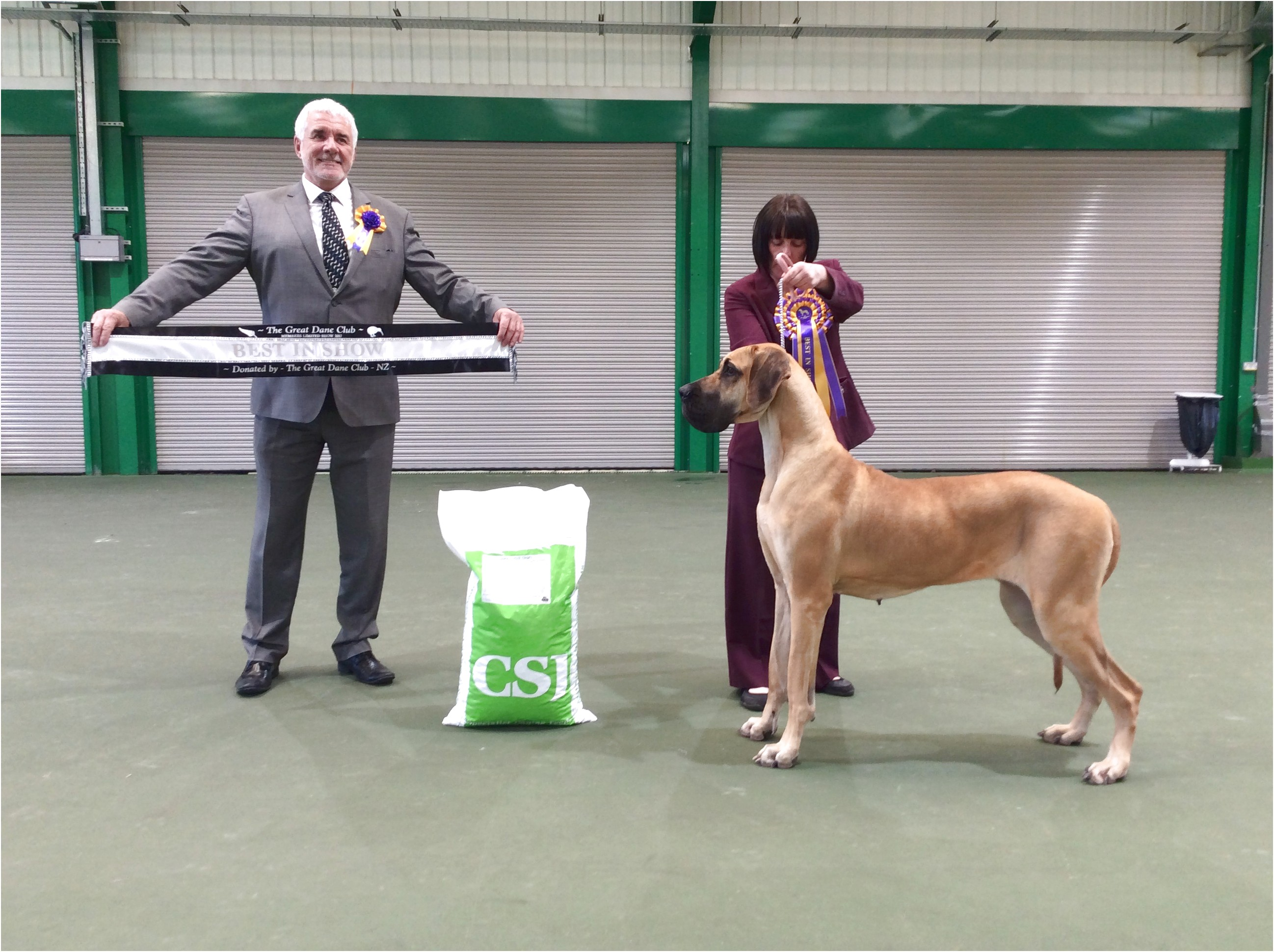 great danes for adoption nz