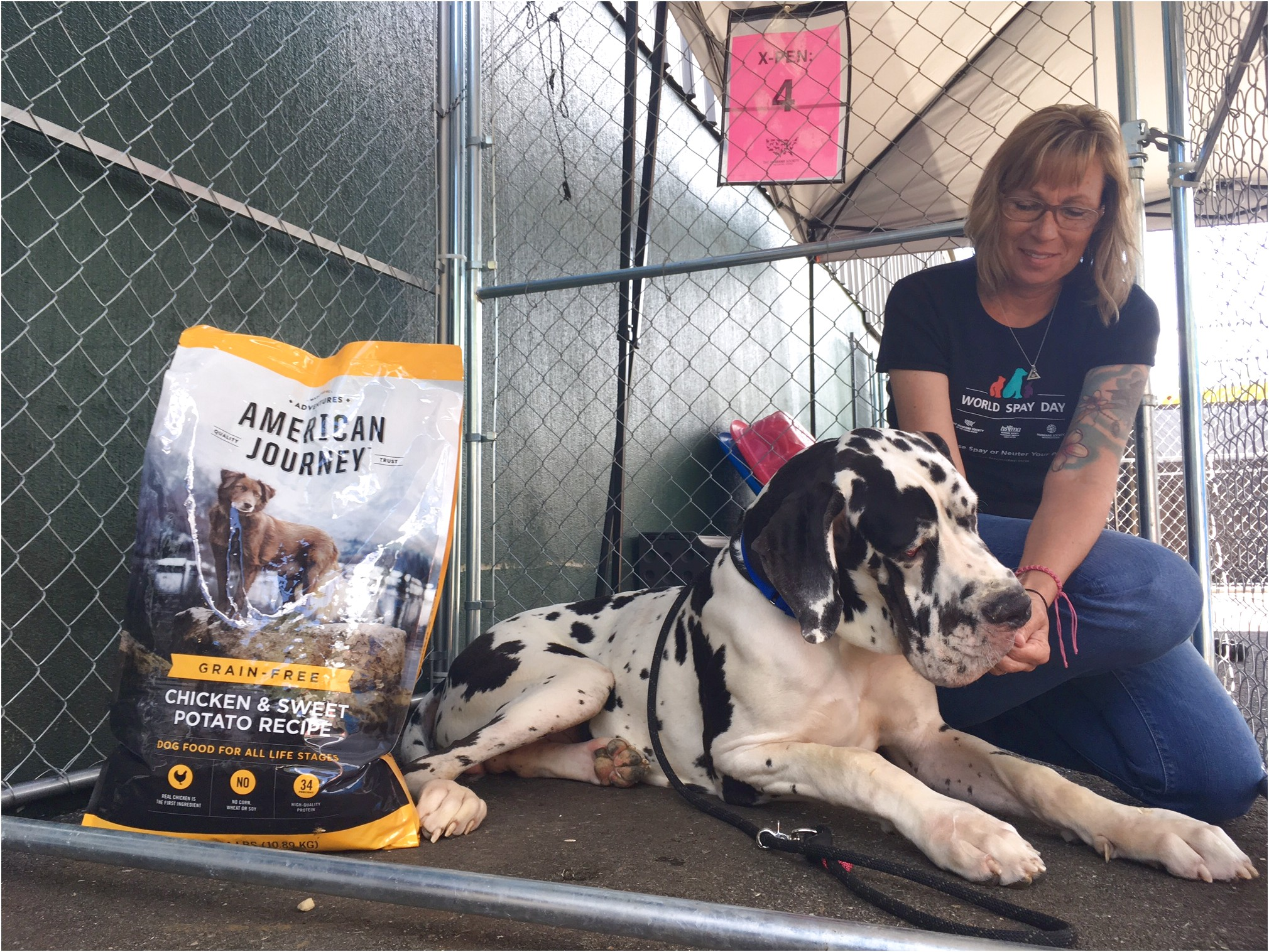 great danes rescued in nh for adoption