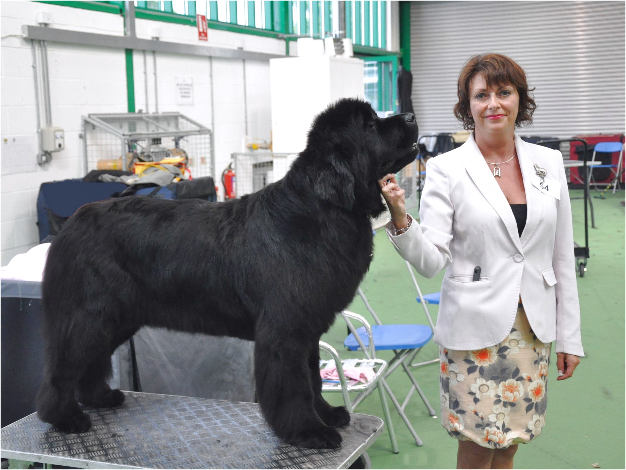 grooming tables for newfoundland dogs