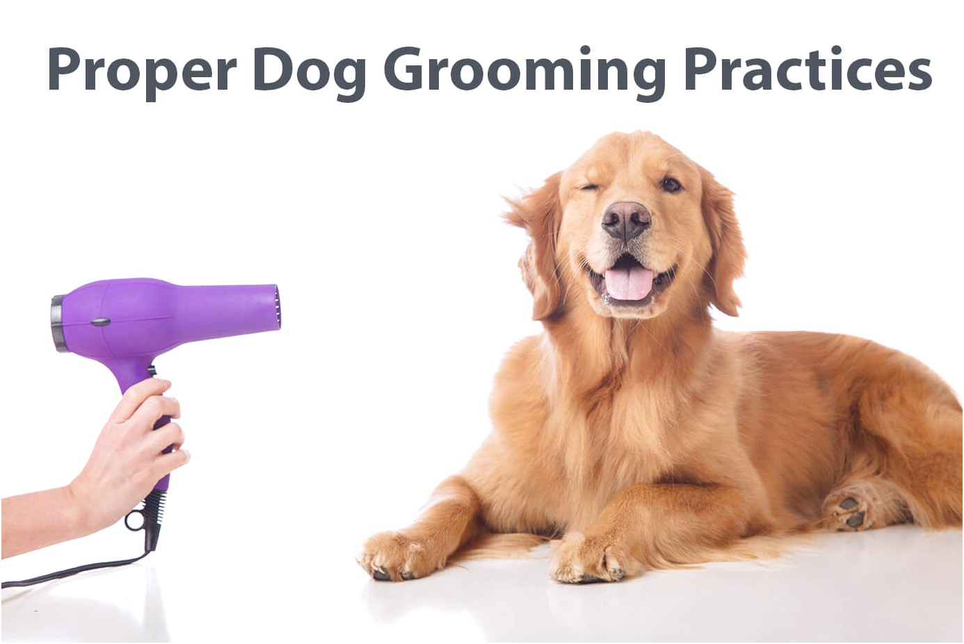 how do i learn to groom dogs