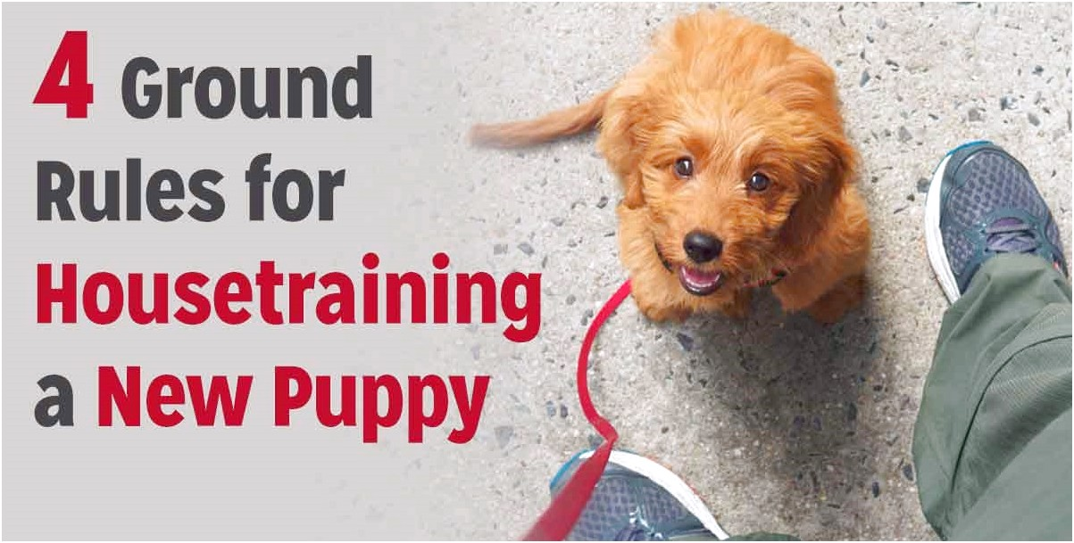 how long does it take to house train a chihuahua puppy
