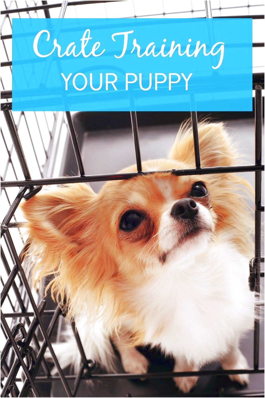 how to crate train a chihuahua
