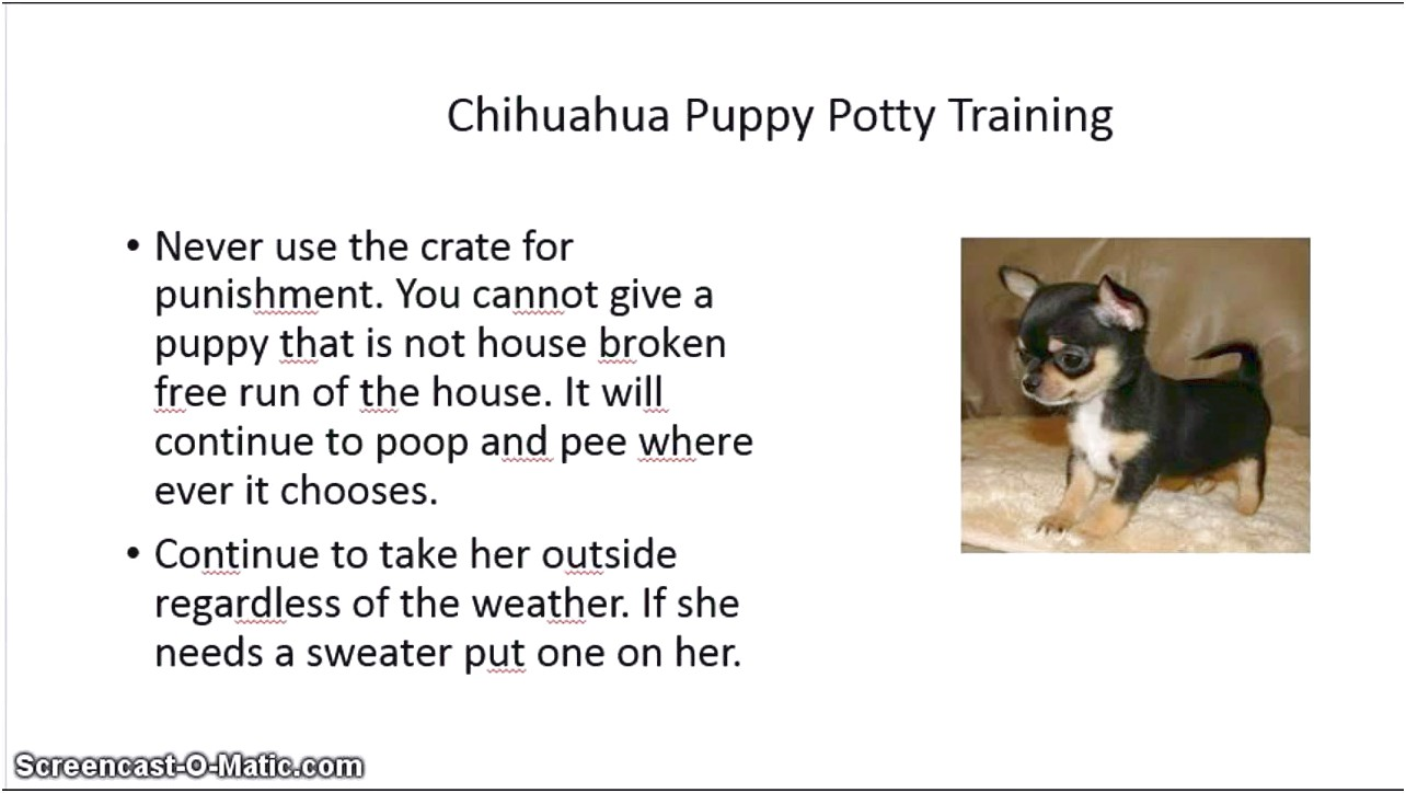 how to indoor potty train chihuahua puppy