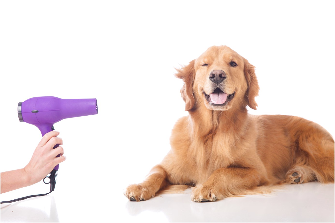 how to learn to groom dogs at home