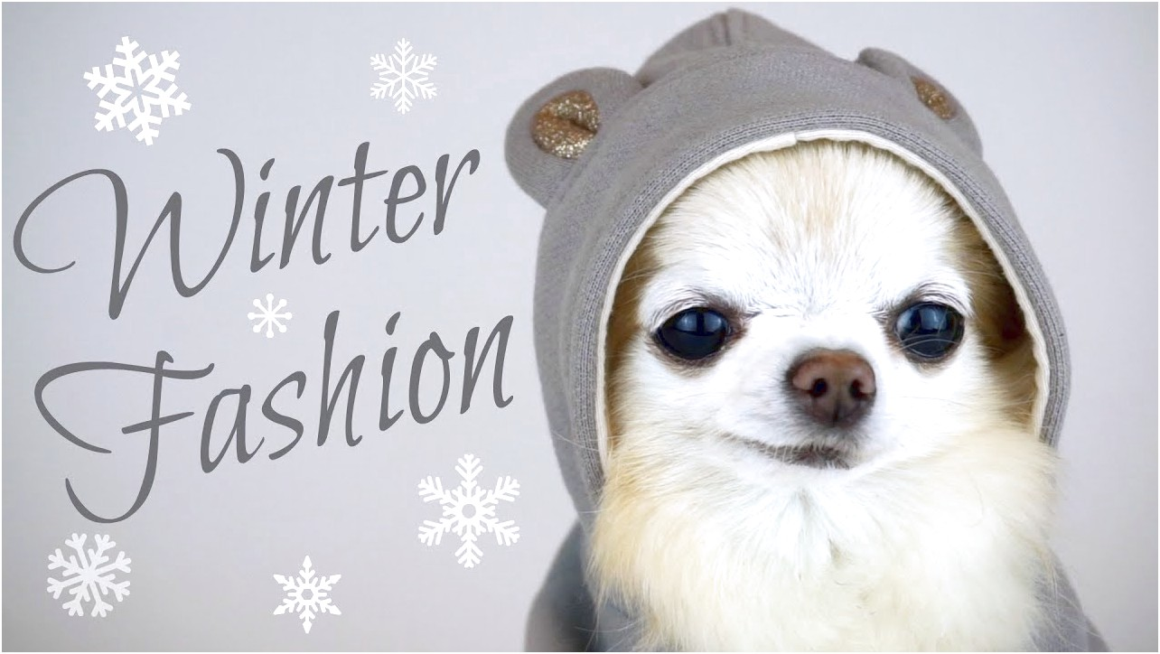 how to potty train a chihuahua in the winter