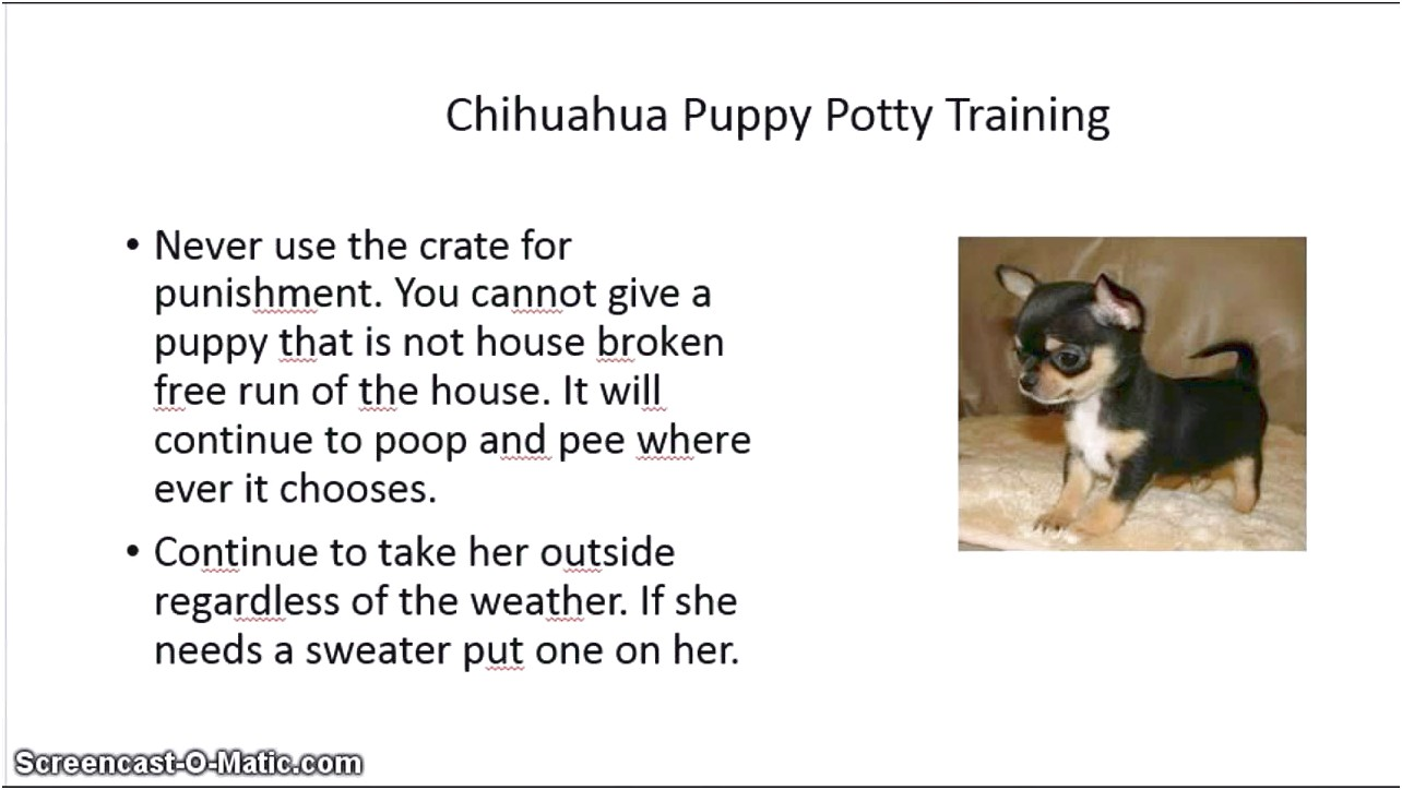 how to train a chihuahua puppy to pee outside
