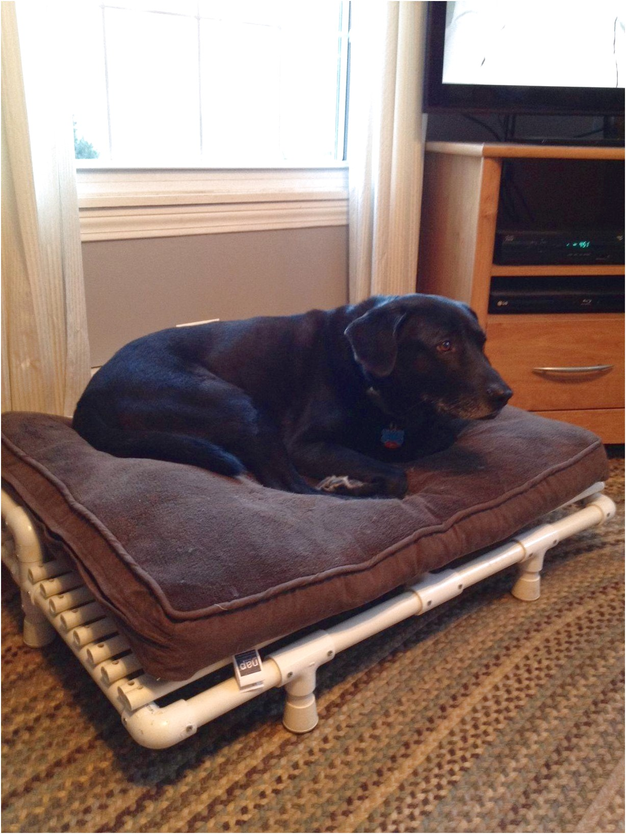 indestructible dog bed for great danes