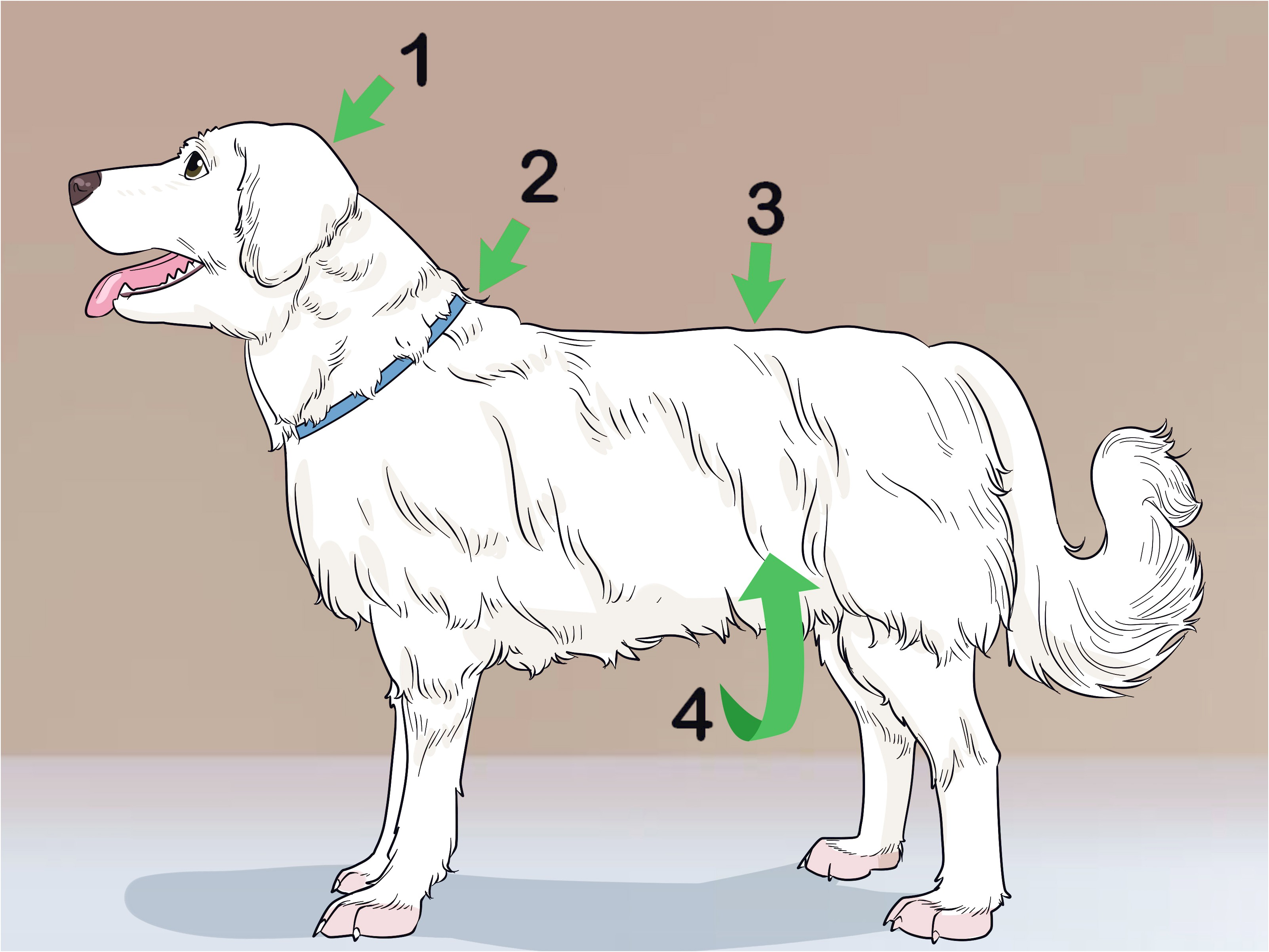 learn to groom a dog