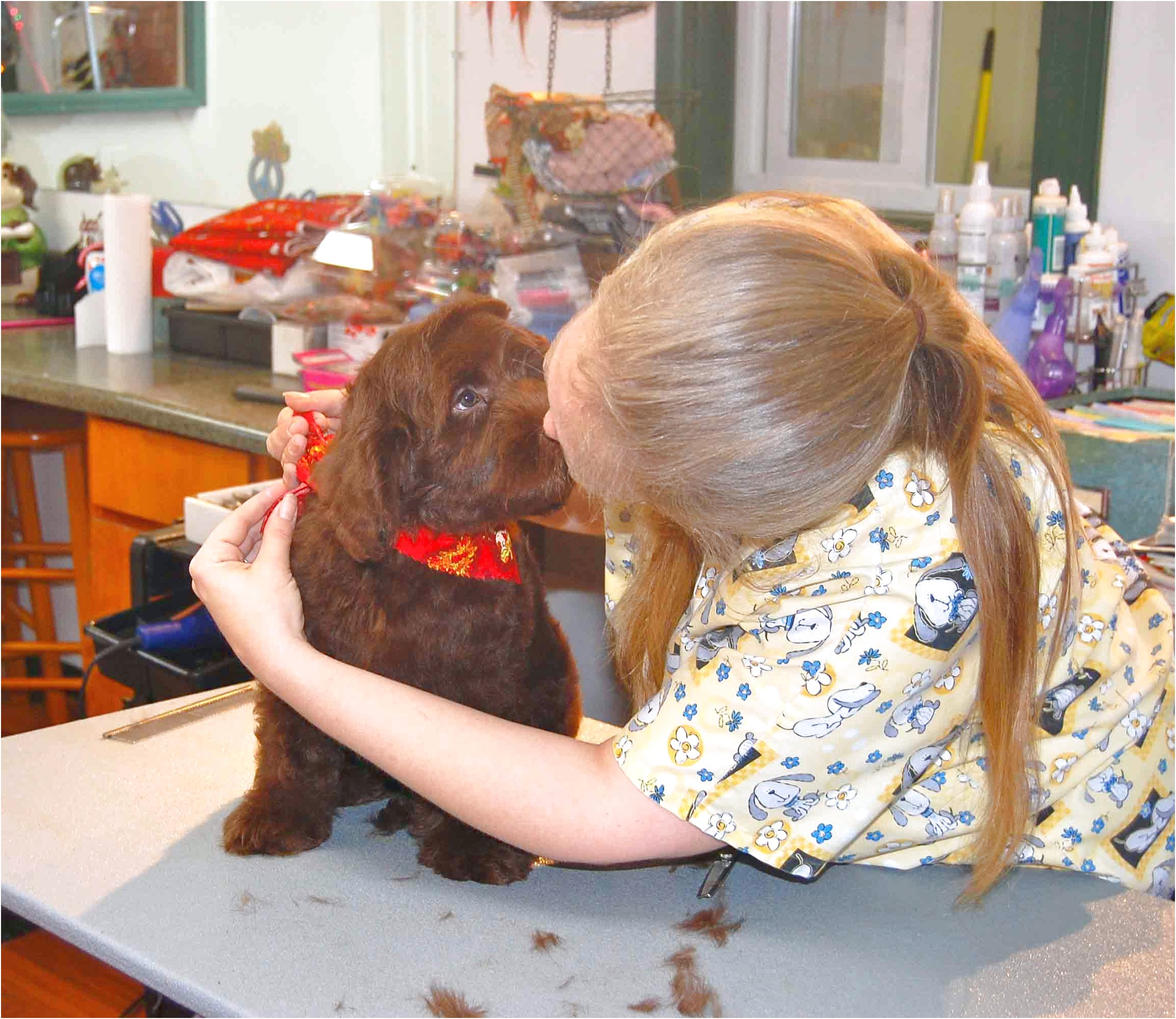 learn to groom dogs at home