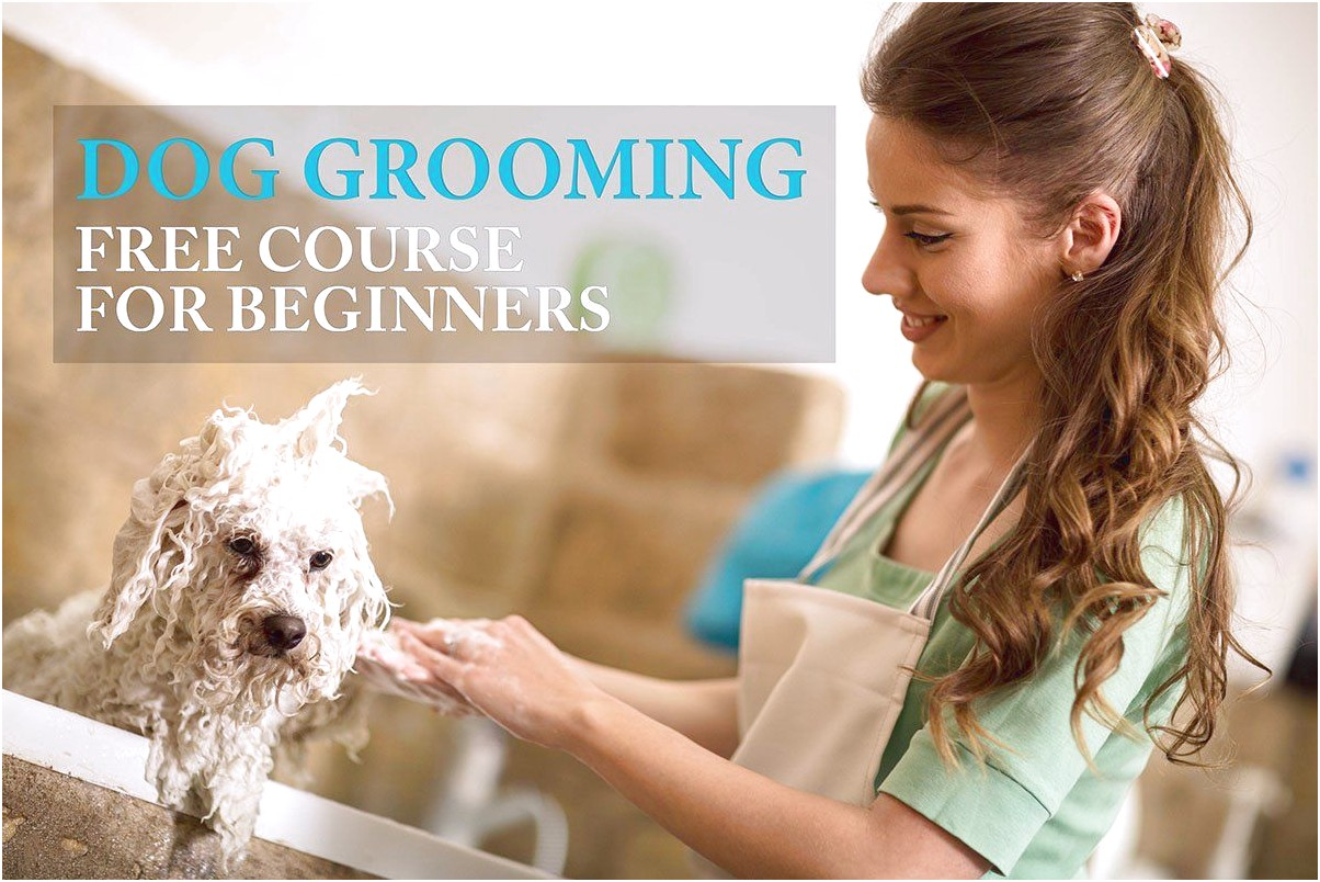 learn to groom dogs free
