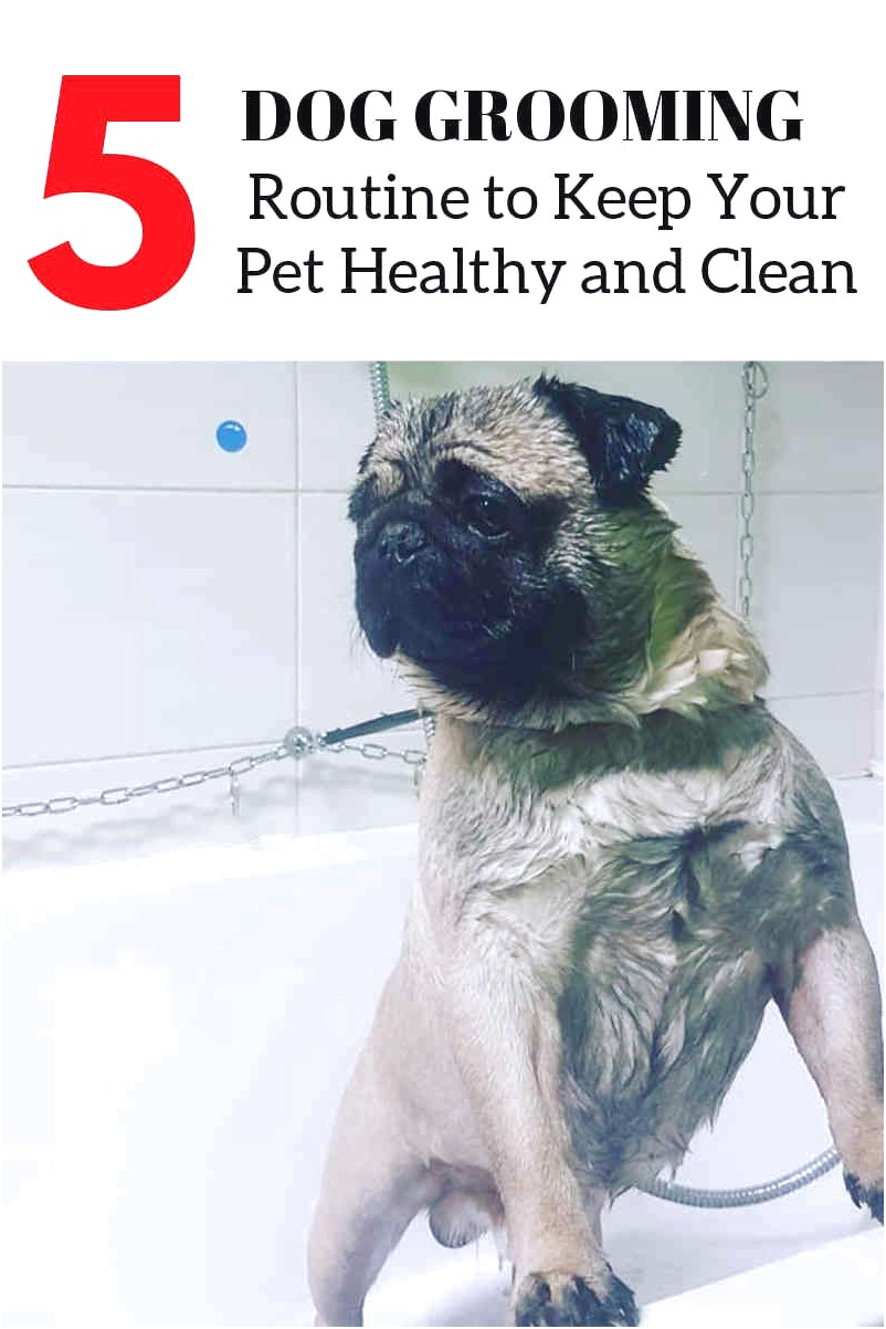 learn to groom dogs online