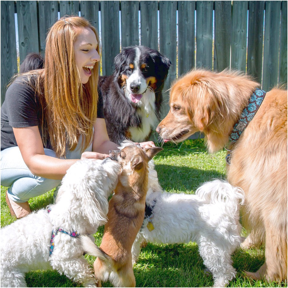 learn to grooming your own dog courses london