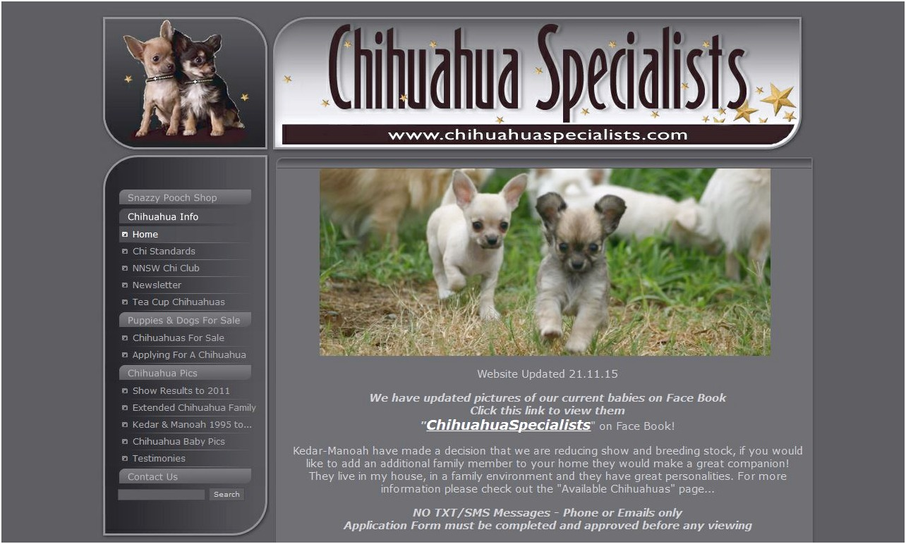 long coat chihuahua breeders nsw