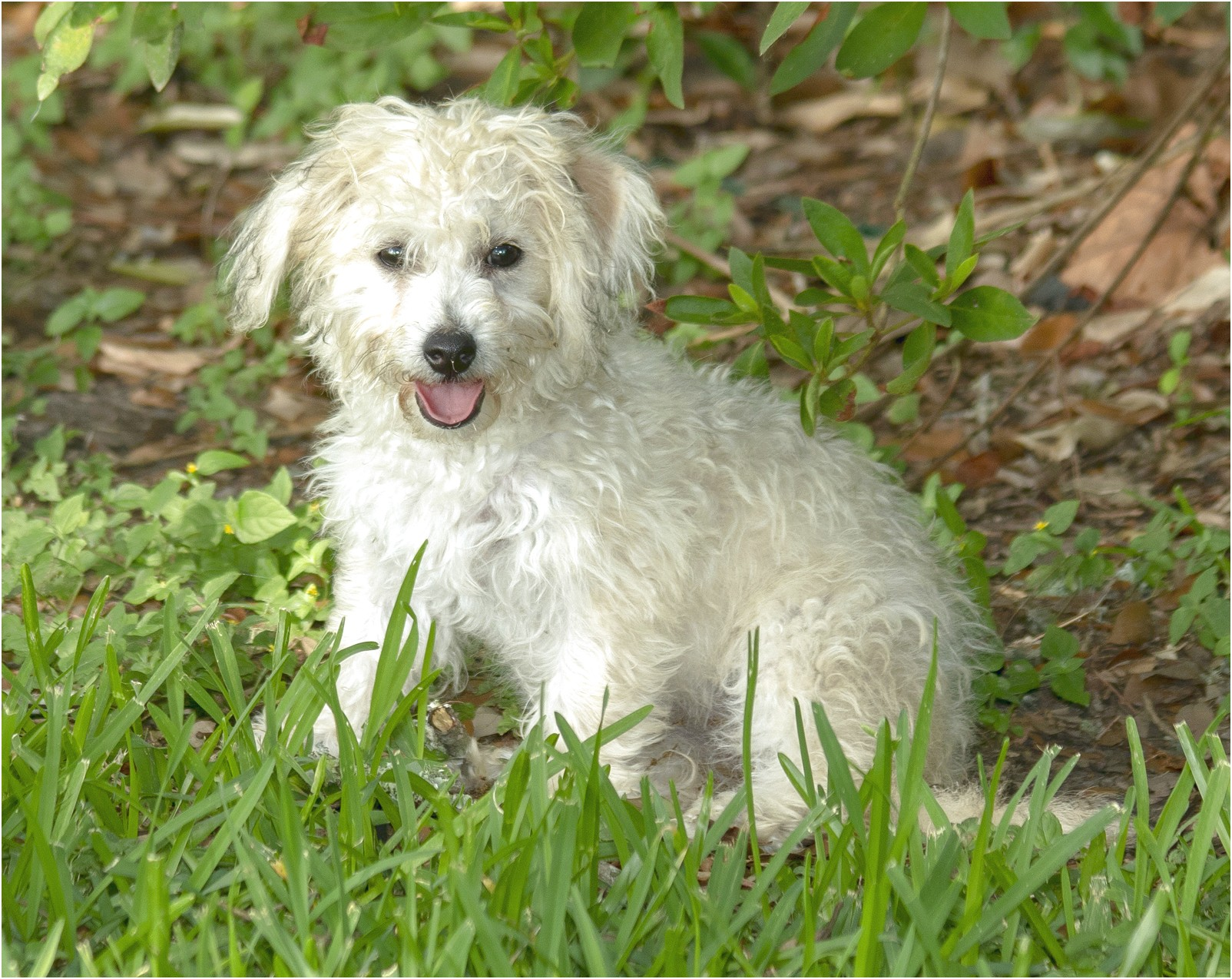 maltese for adoption in ct