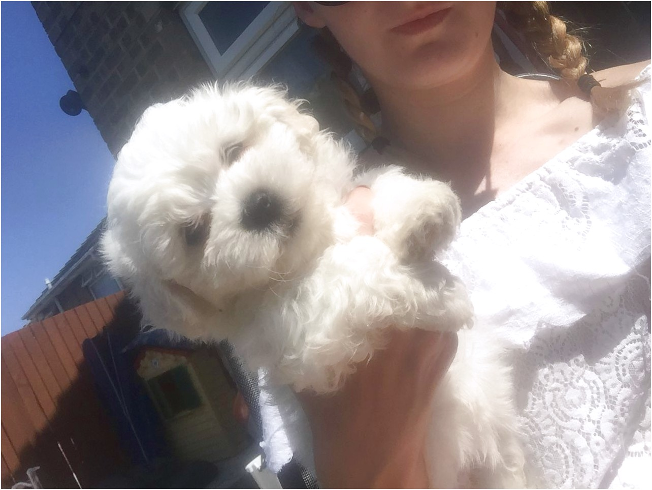 maltese puppy for sale hull