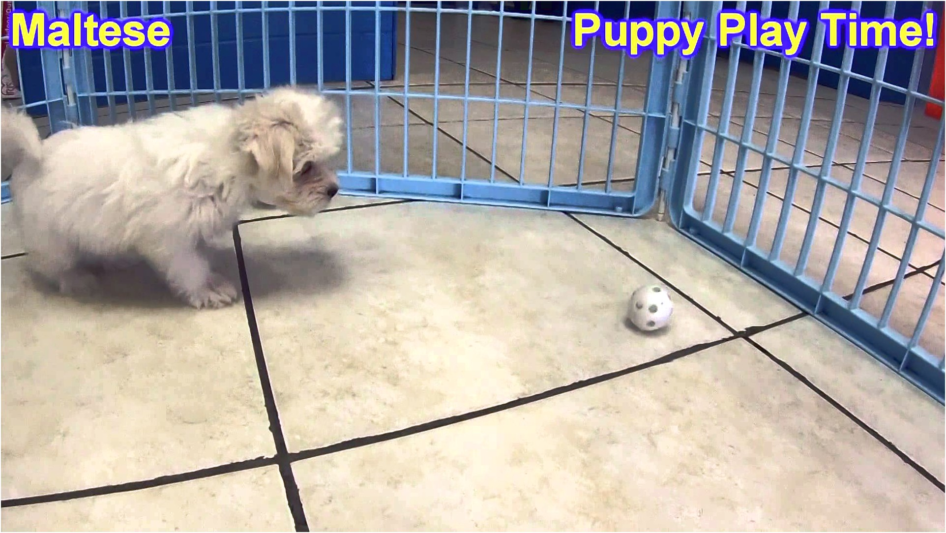 maltese puppy for sale nebraska