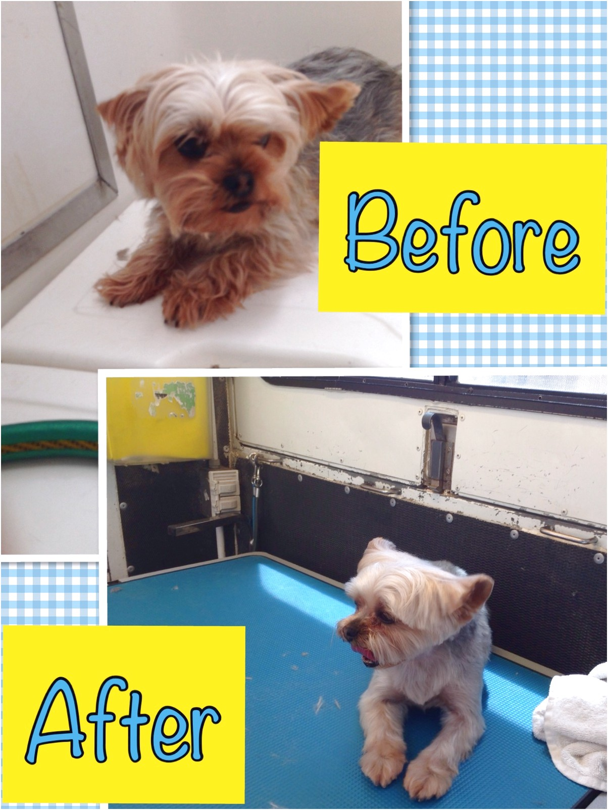 mobile dog grooming mesa az