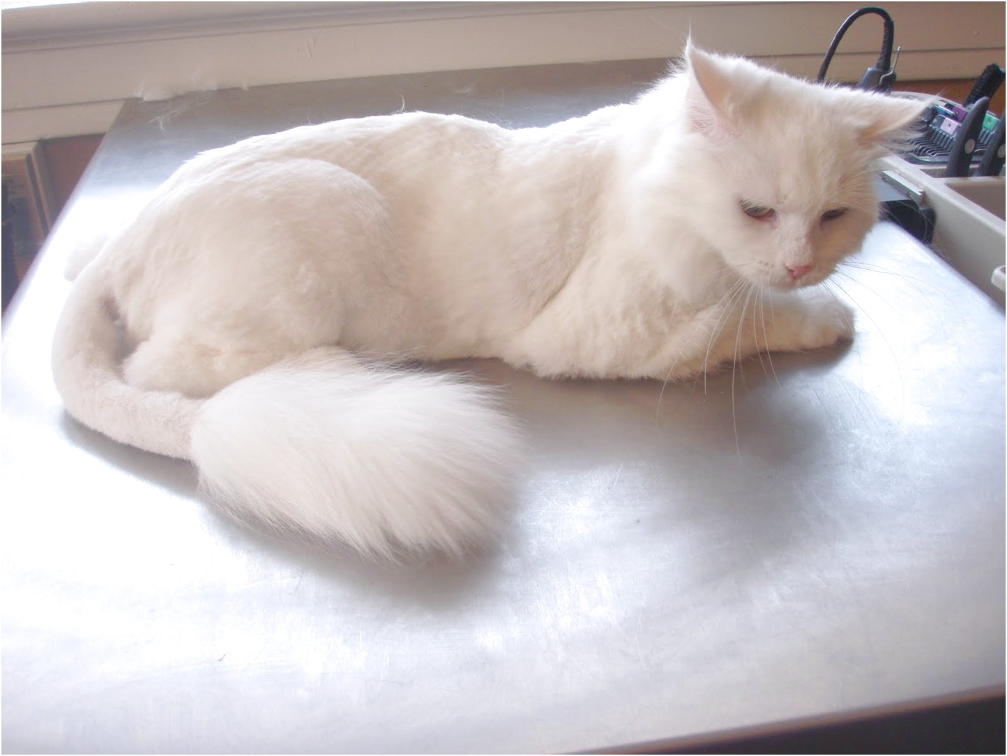 mobile pet grooming near me cats
