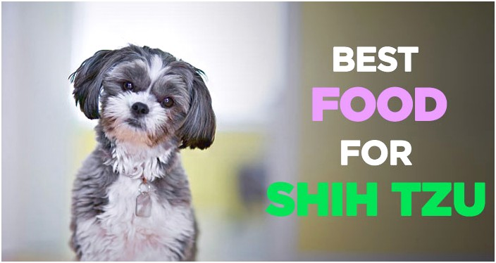other food for shih tzu