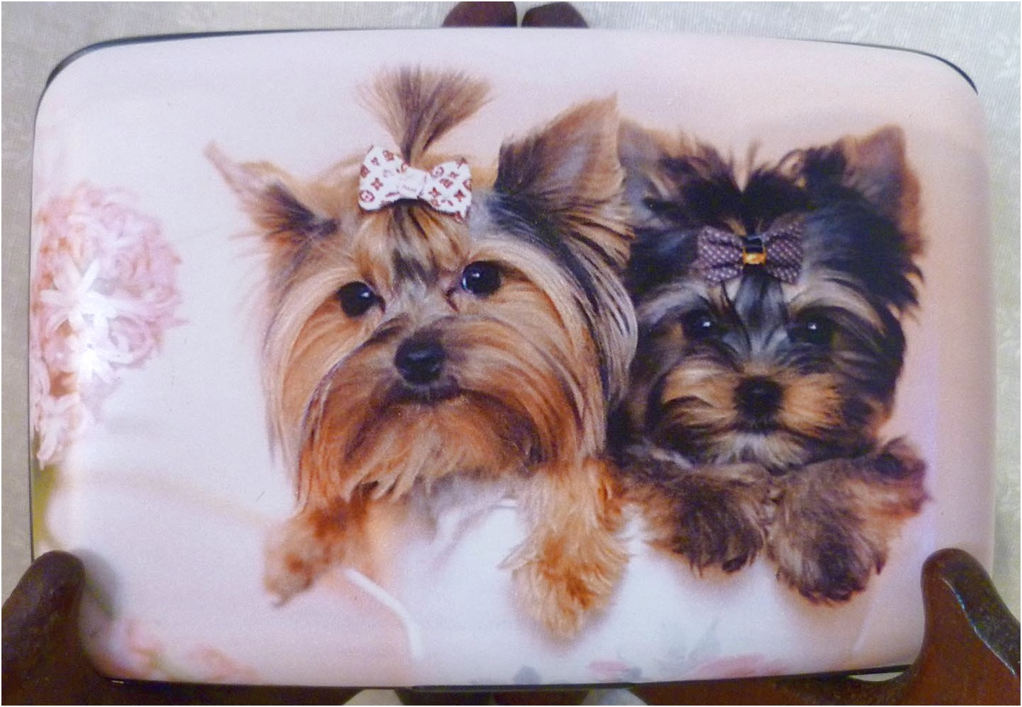 pocketbook pups yorkshire terriers