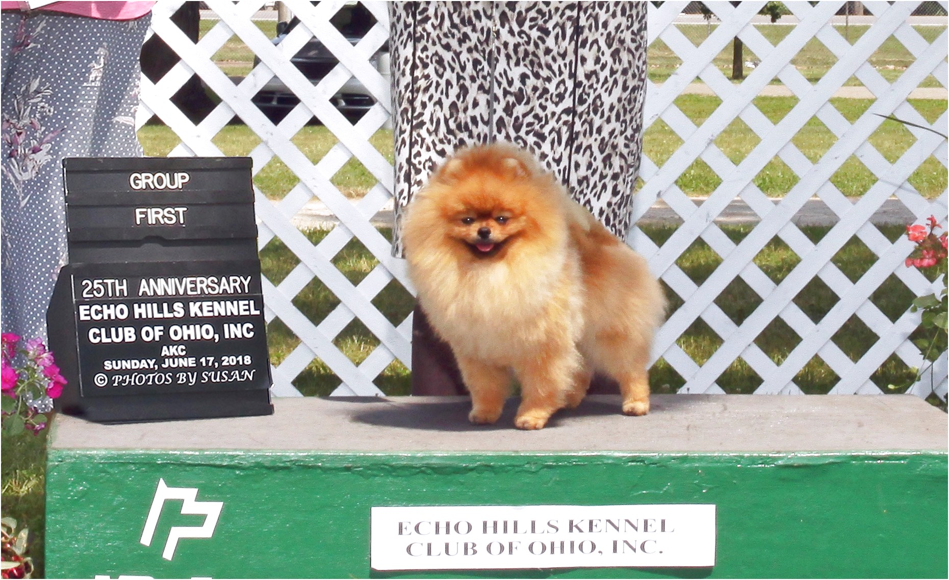 pomeranians for adoption in alabama