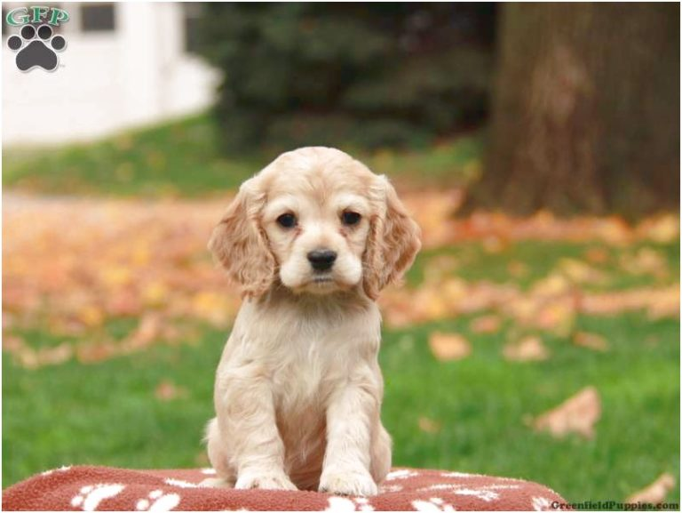 puppies for sale near 08234