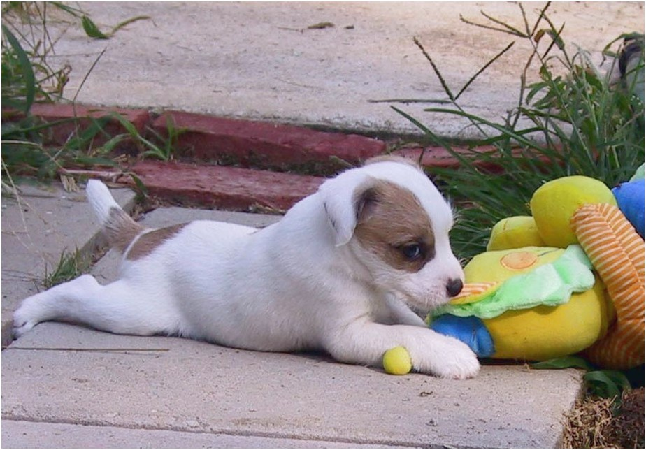 puppies for sale near 52556