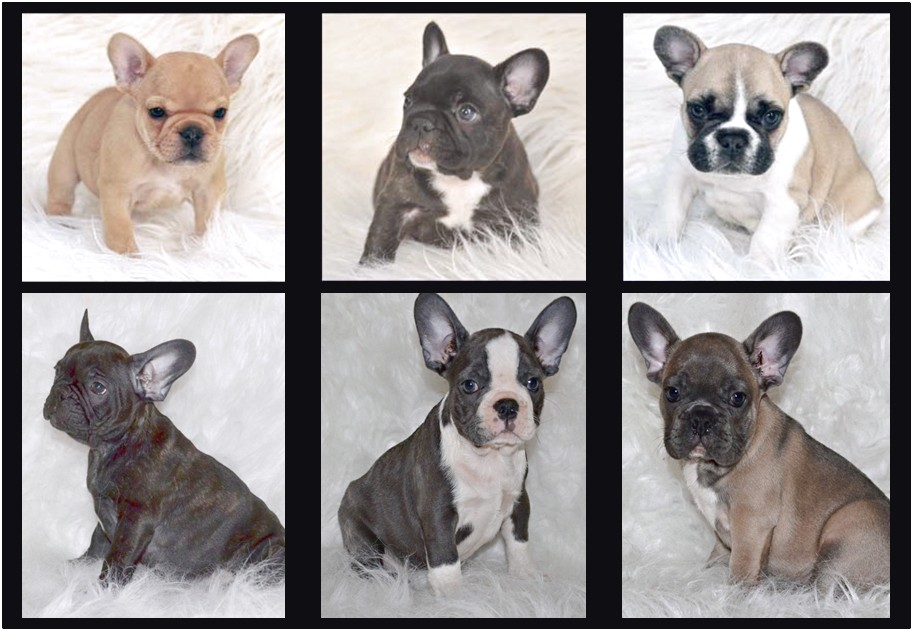 puppies for sale near 90201