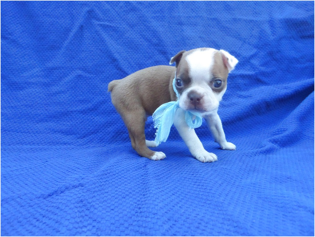 puppies for sale near 90731