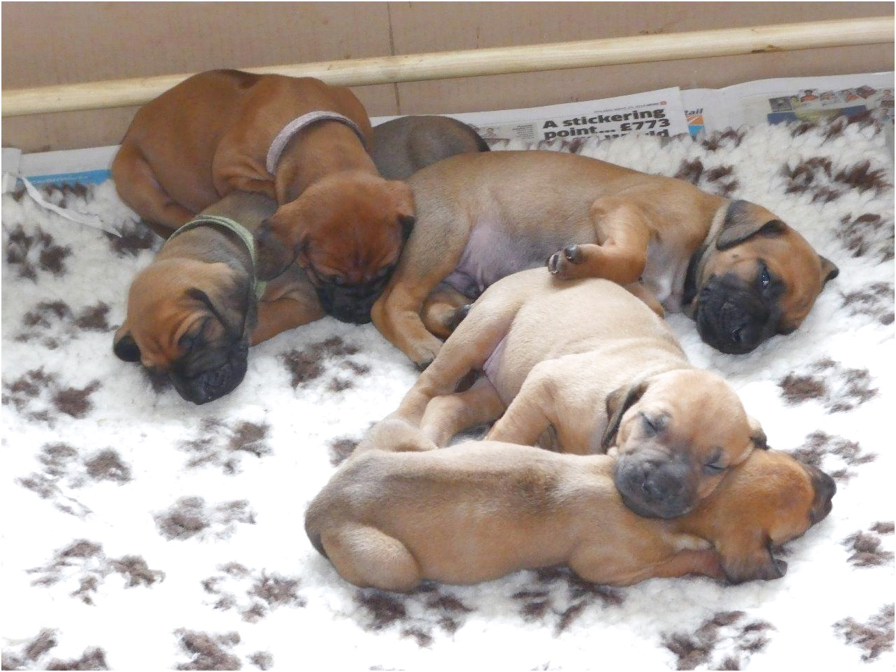 puppies for sale near 91307