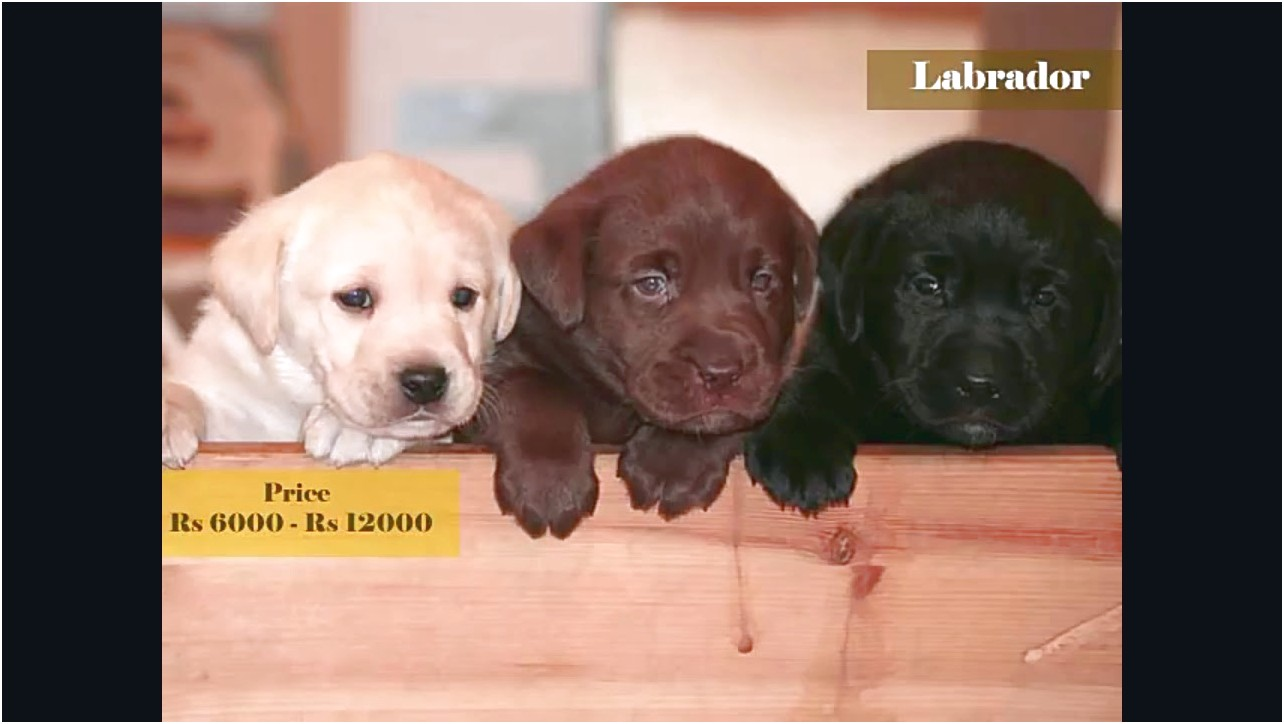 puppies for sale near me under 1000