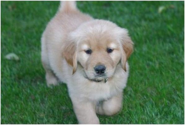 puppies for sale near queensbury ny