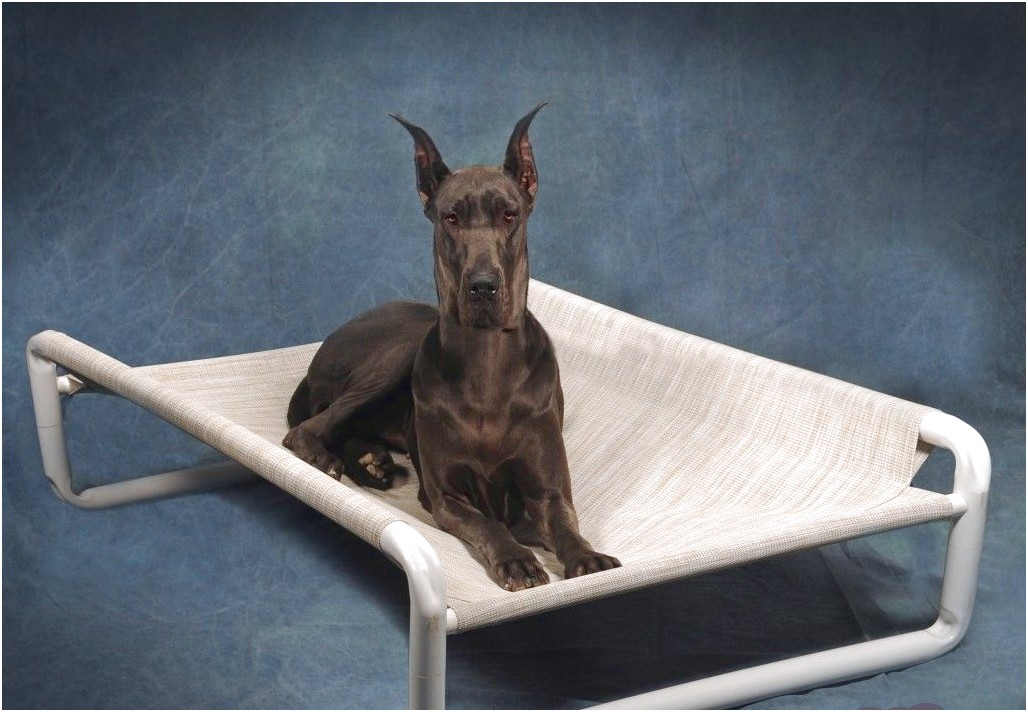 raised dog beds for great danes