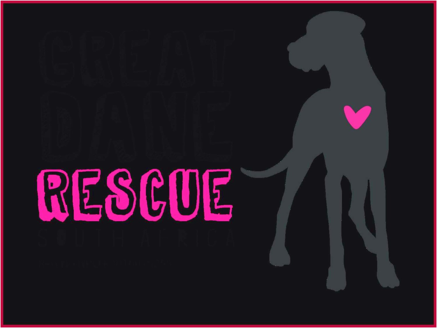rescued great danes for adoption