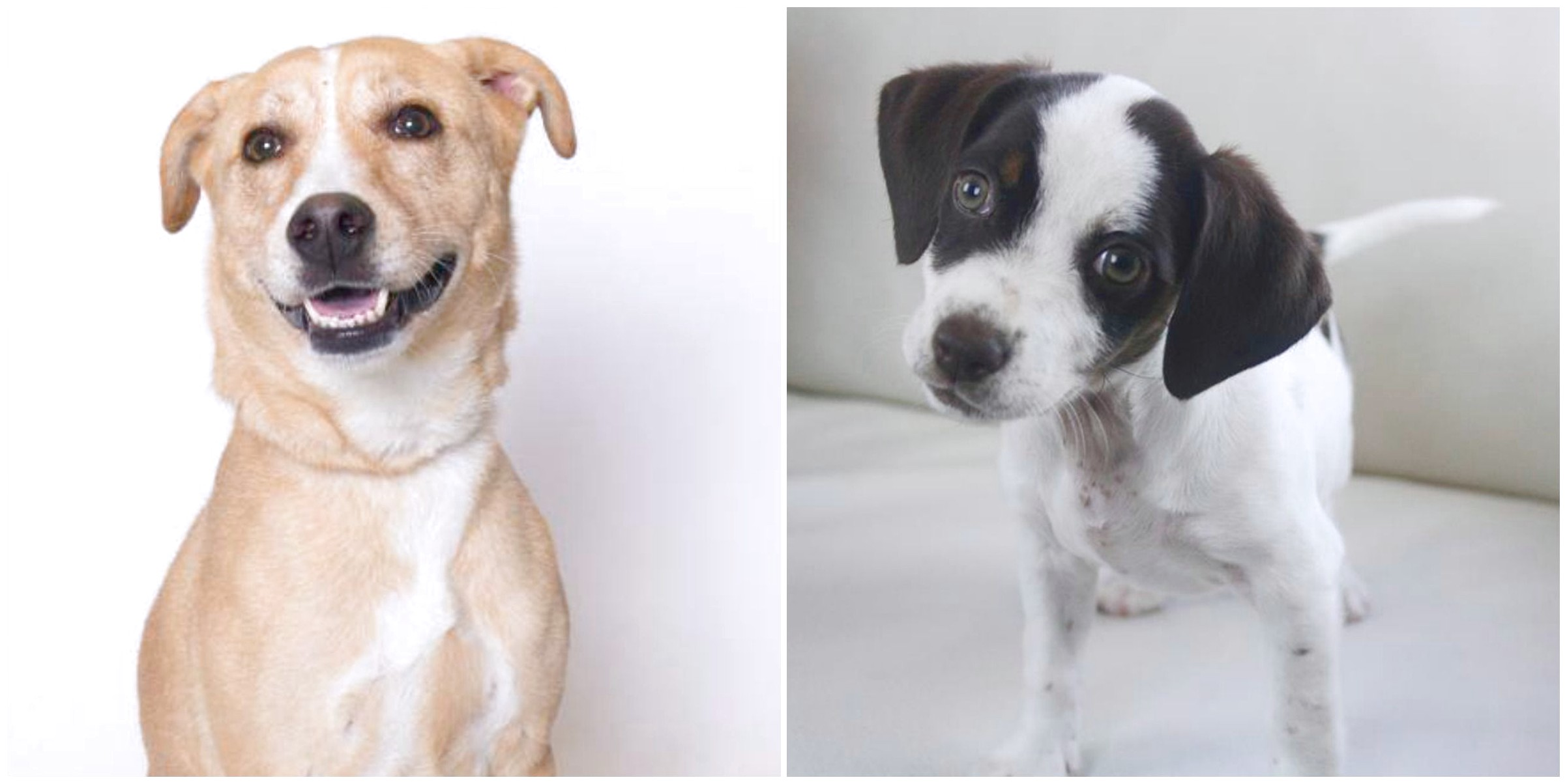 small cross breed dogs for adoption and rescue