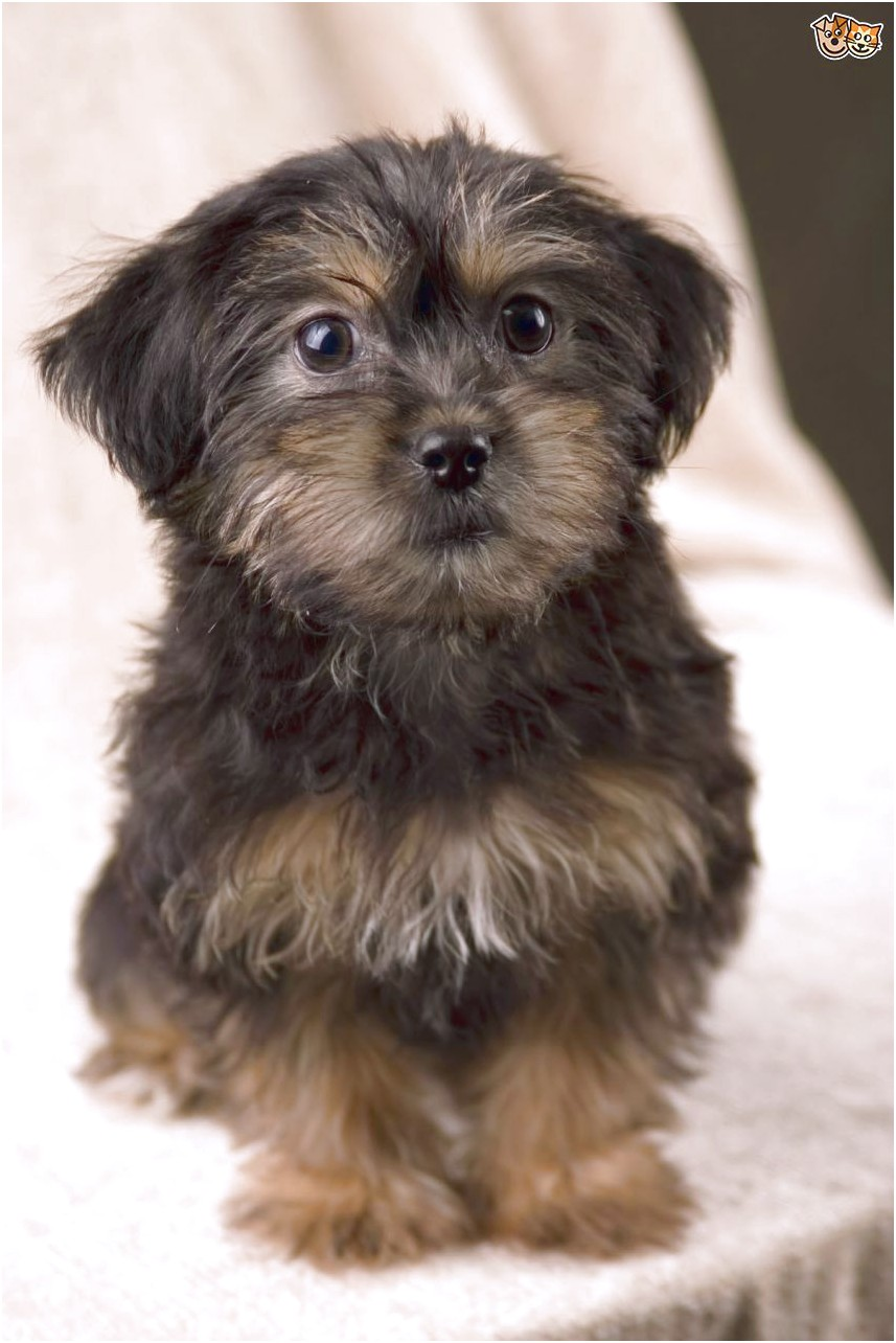 small cross breed dogs for sale in yorkshire
