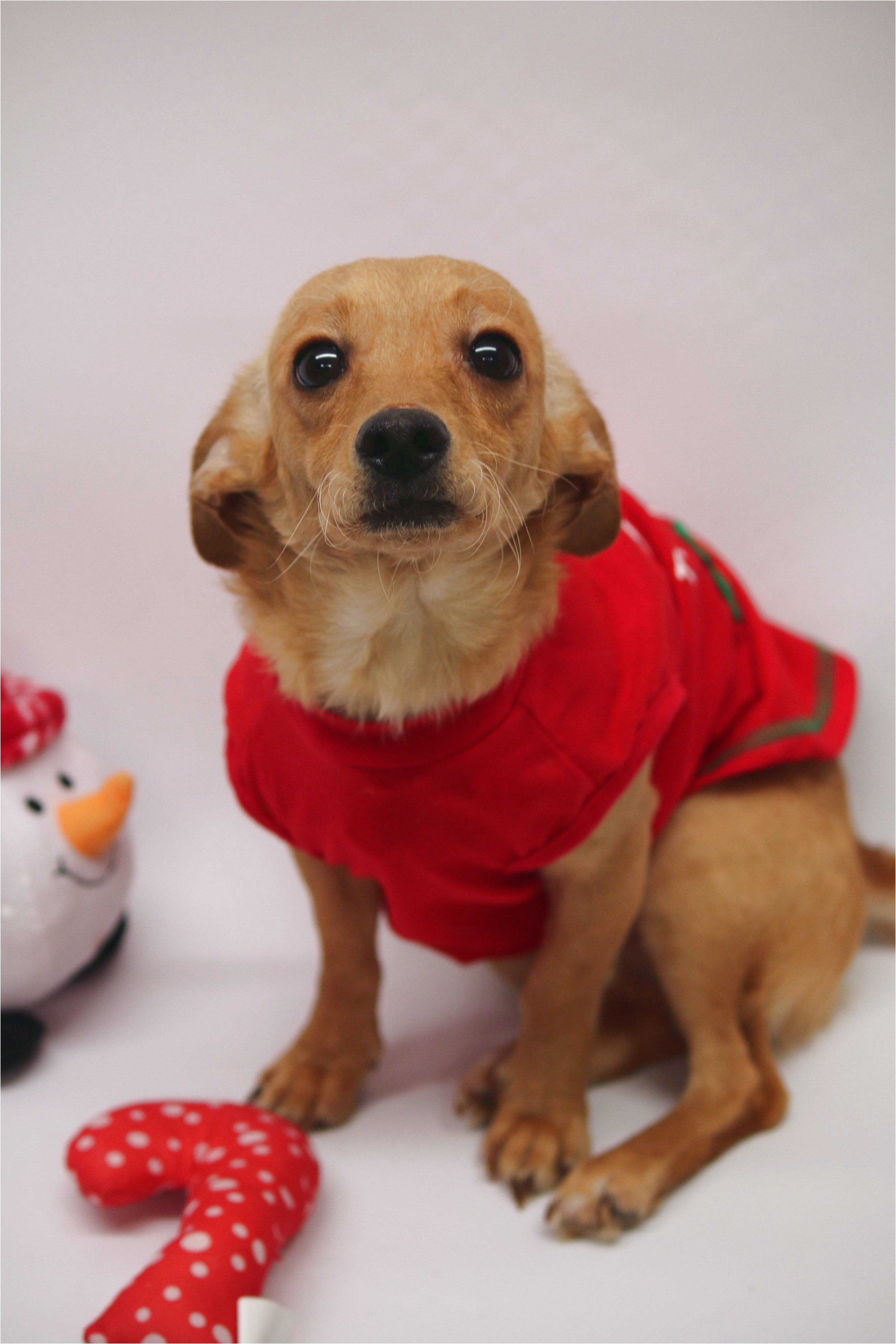 small dog breeds for adoption in az