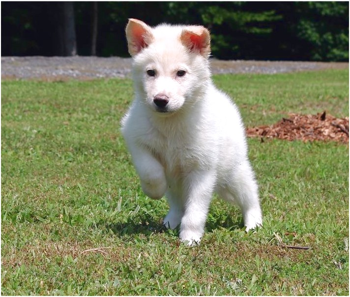 small dog breeds for sale in charlotte nc