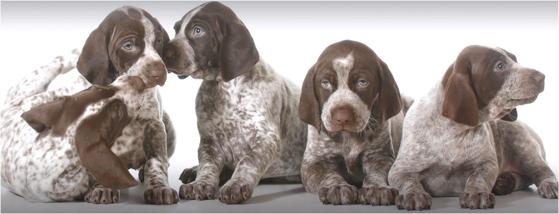 small dog breeds for sale in south dakota