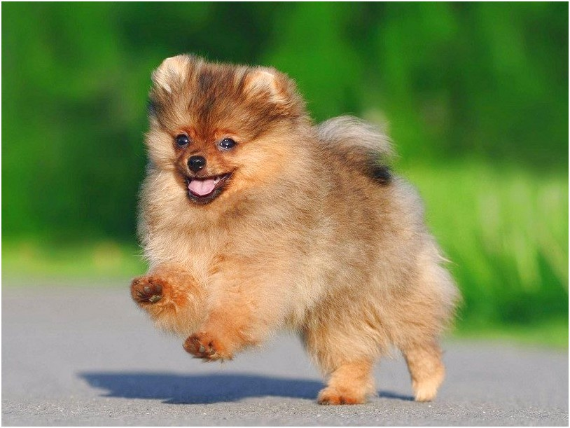 small dog breeds on sale