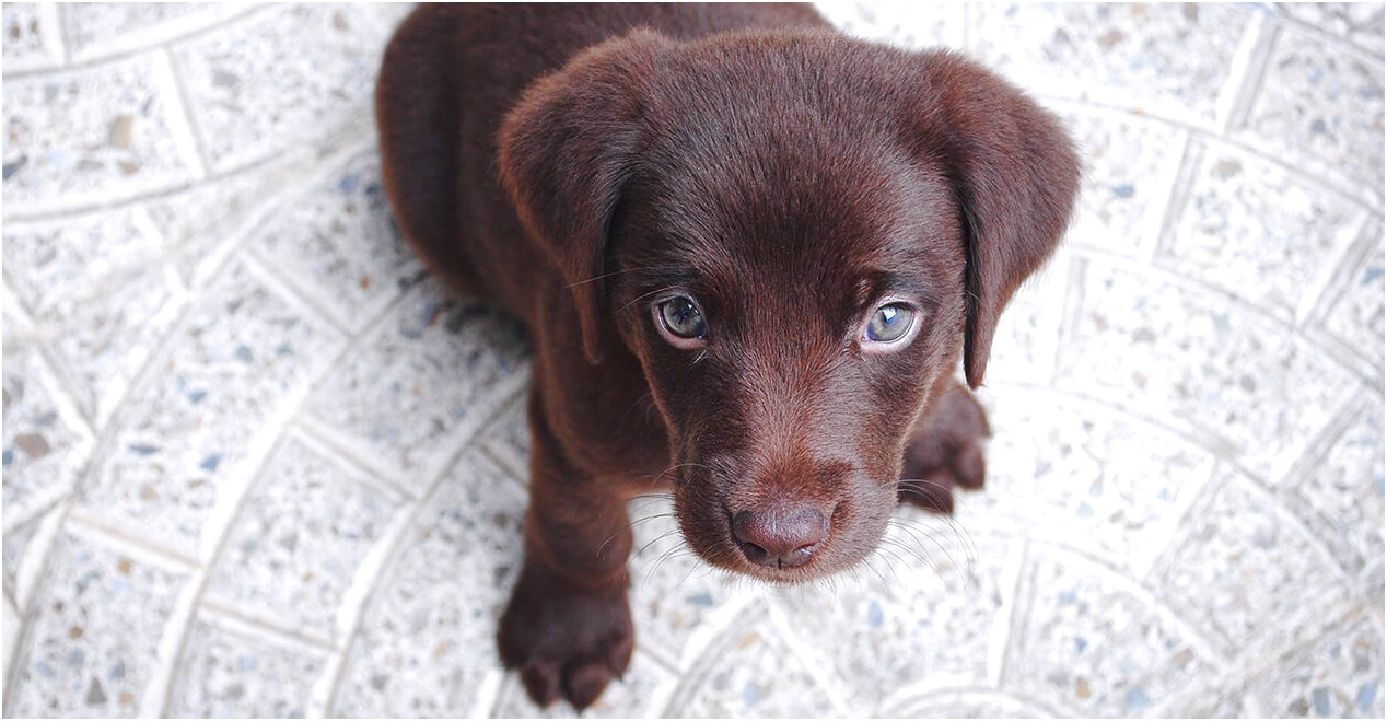 small puppies for adoption ontario