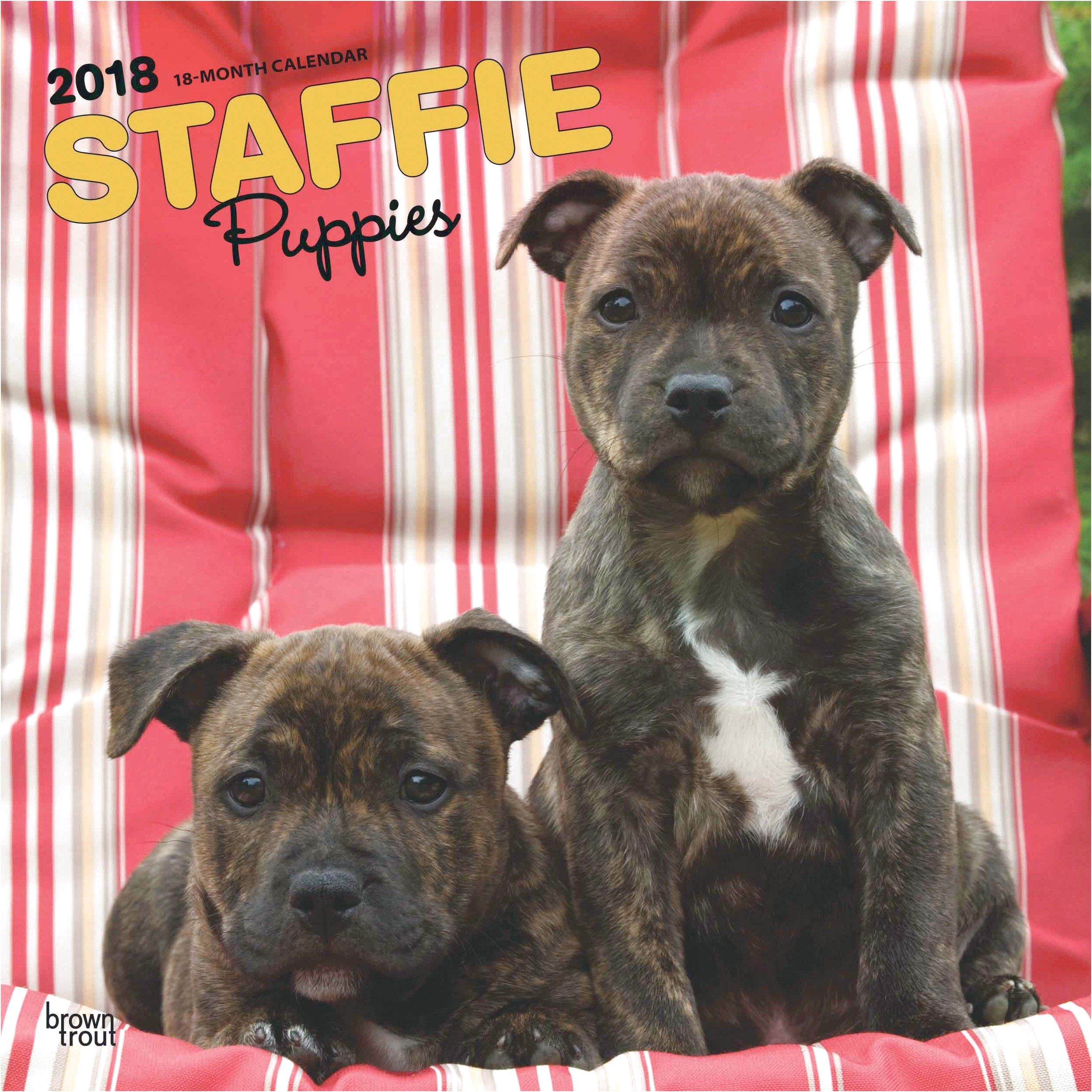 staffordshire bull terrier pups northern ireland