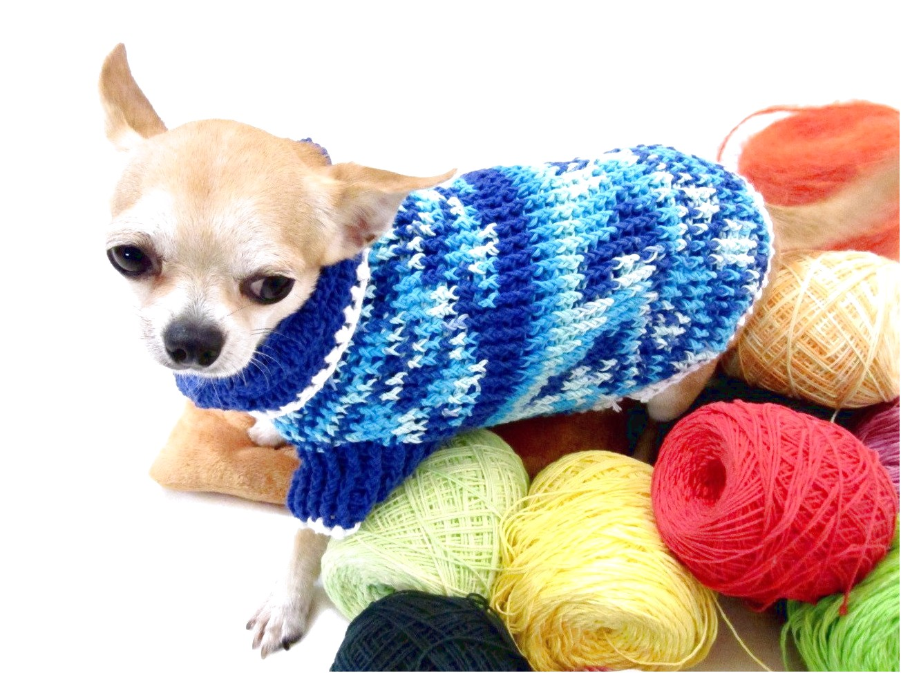 teacup chihuahua clothes cheap