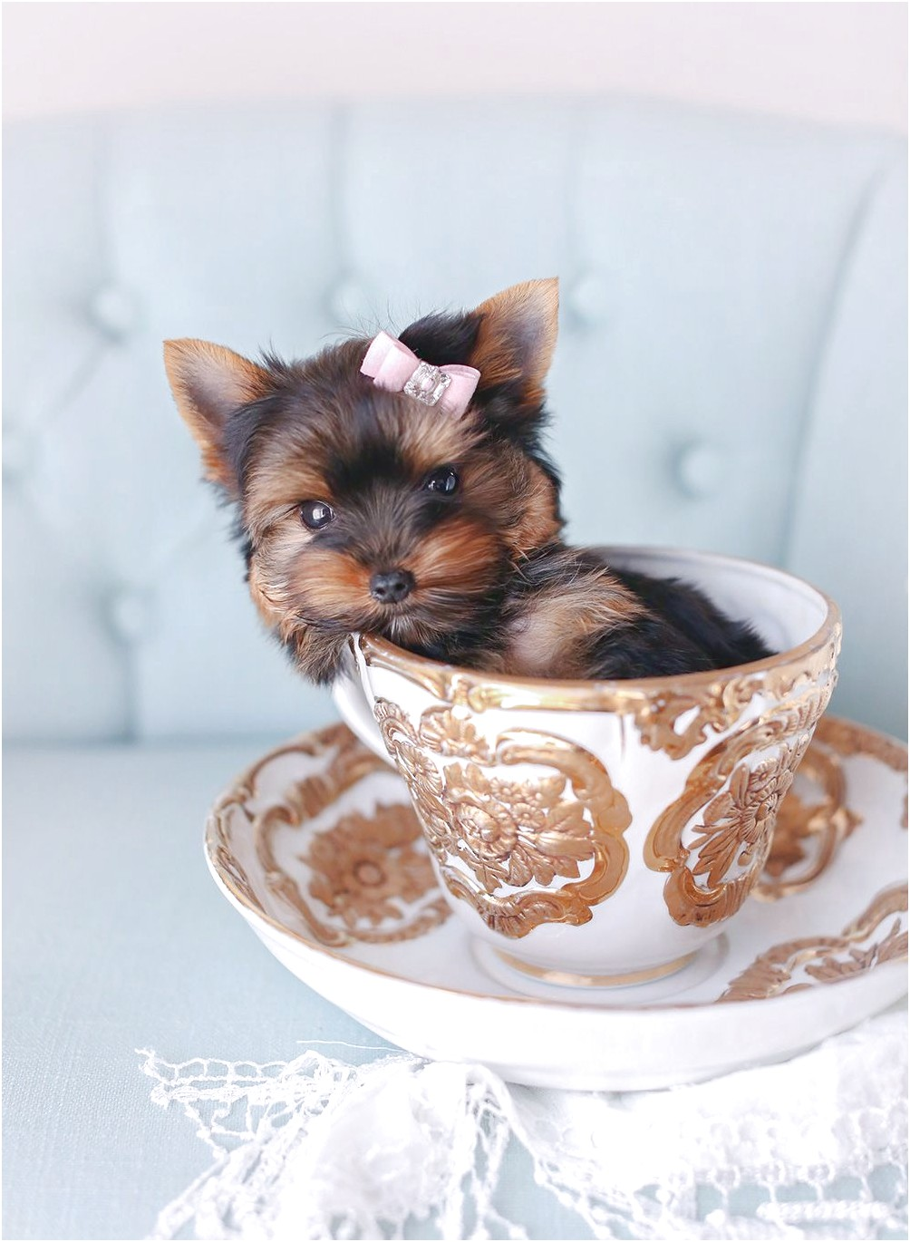 tiny teacup yorkshire terriers for sale
