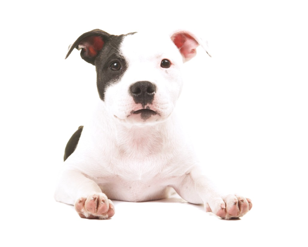 top 5 dog foods for great danes