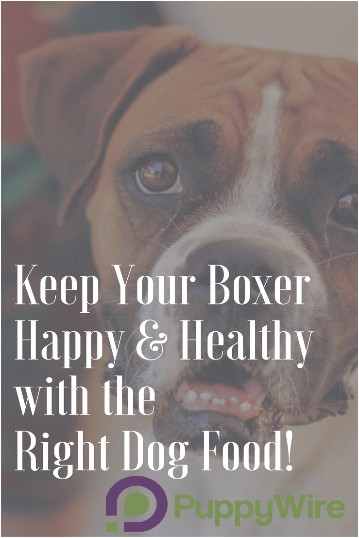 what is best dog food for boxers