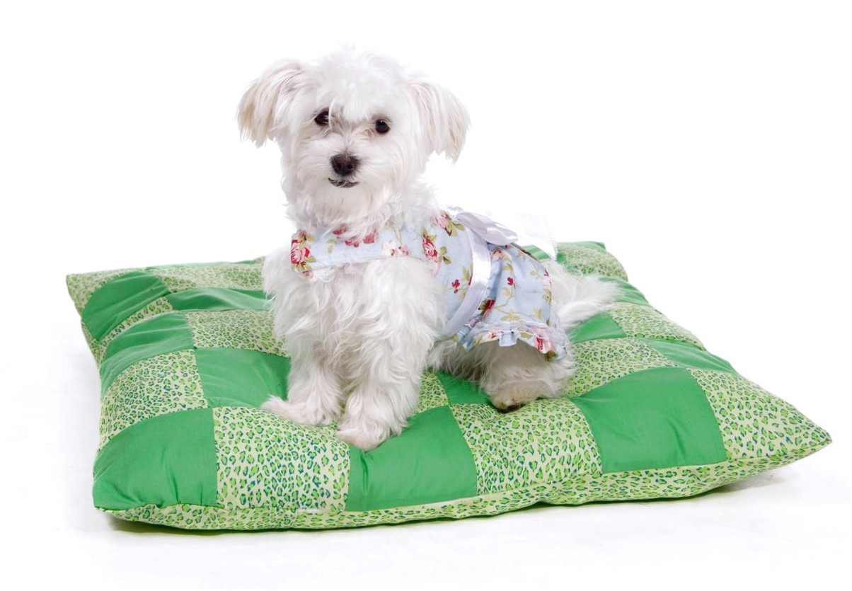 what is best food for maltese dog