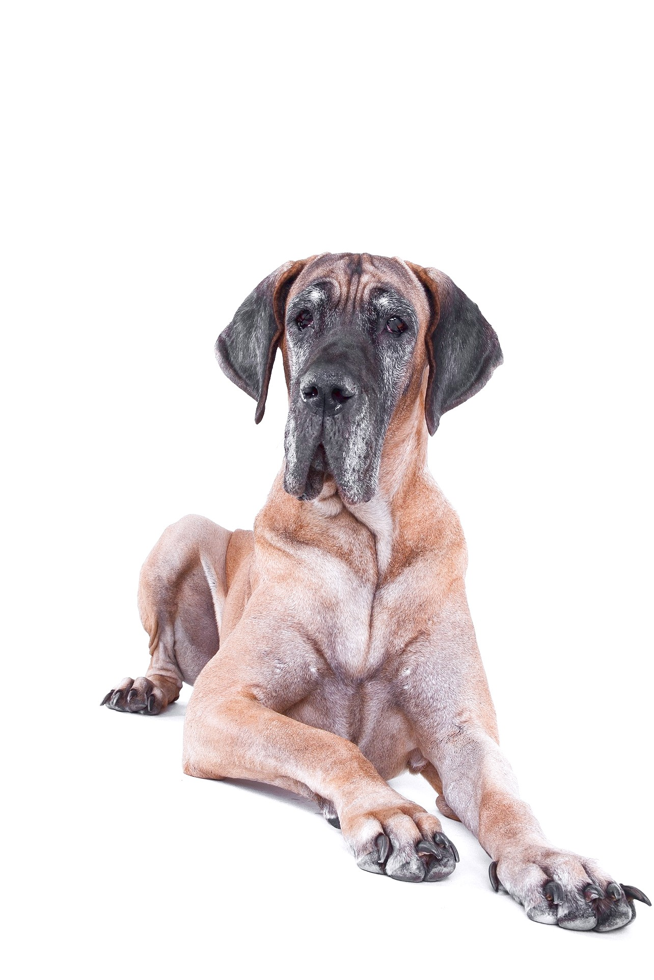 what is the best great dane puppy food